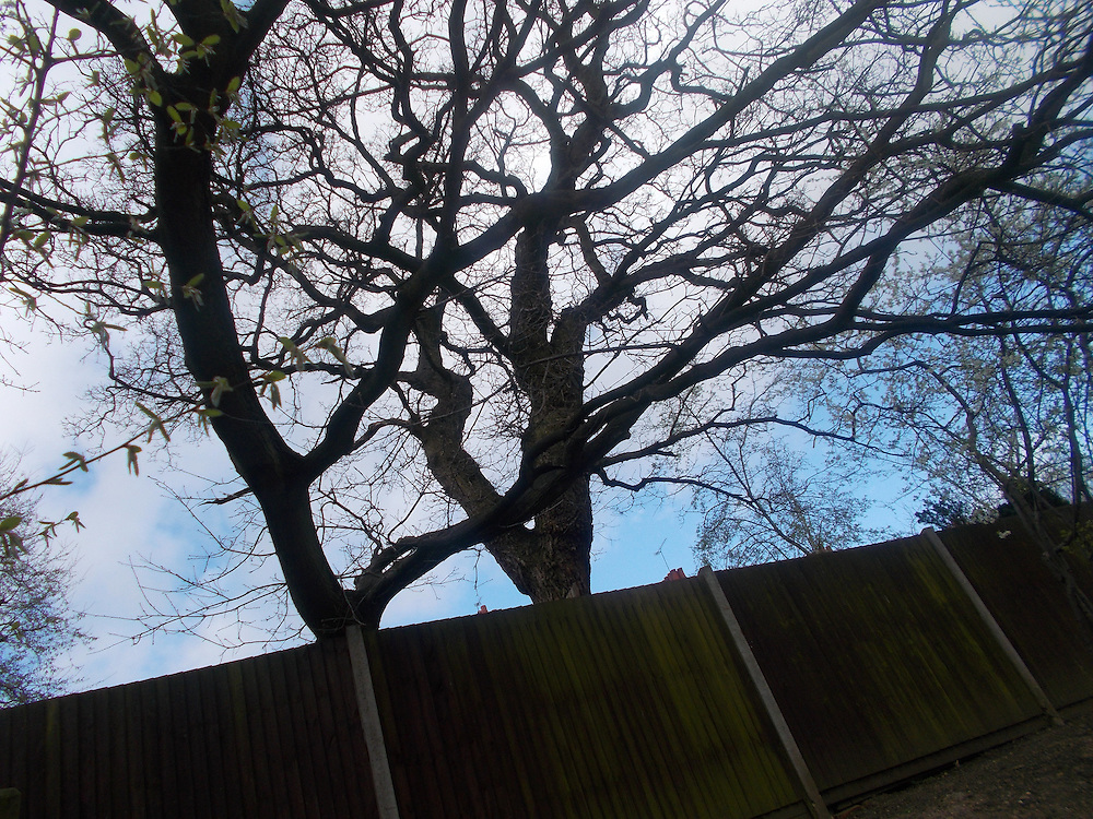Through the lens photography project, with pupils with autism from TreeHouse School, North London
