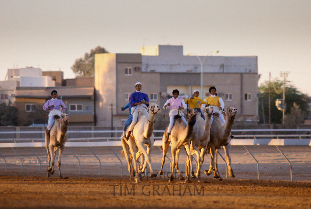 Camel racing at The Equestrian Club in Riyadh, Saudi Arabia