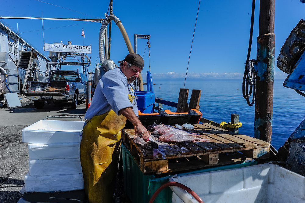 Fisherman, Monterey, California, Harbor,  Monterey Bay