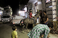Egypt, Cairo:A guy rides a horse as a van collecting garbage from Cairo passes behind him in Moqattam.ph.Christian Minelli...