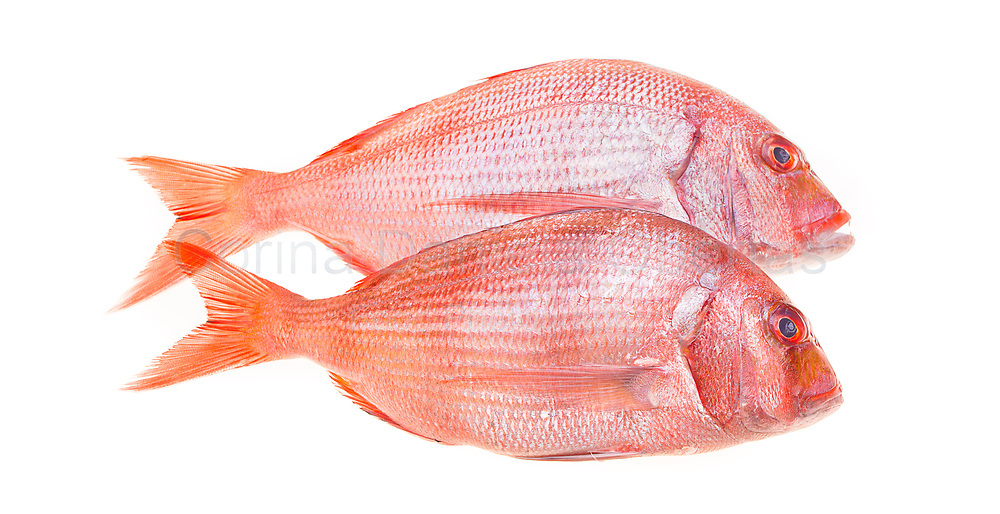 Fresh snapper fish isolated on white.