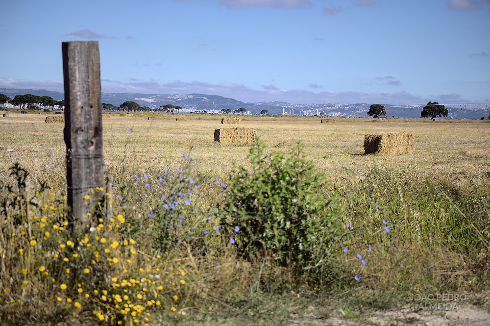 The farming fields in the plains outside Lisbon