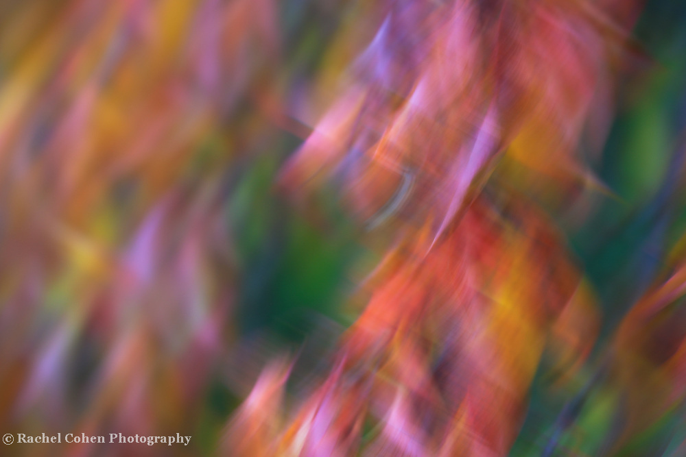 &quot;Pirouette&quot;<br />