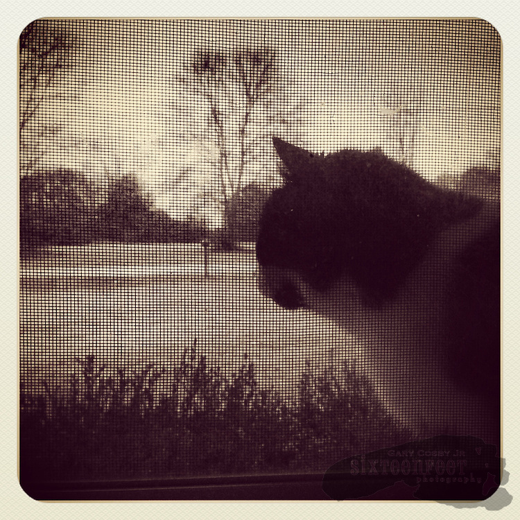 Gary Cosby Jr.  iPhone photographs  Cat in the window.