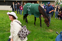 Trish Sgromolo of Frenchtown, New Jersey, left, posed for a photo with Kentucky Derby 142 winner Nyquist at his barn on the backside the morning after the race, Sunday, May 08, 2016 at Churchill Downs in Louisville.