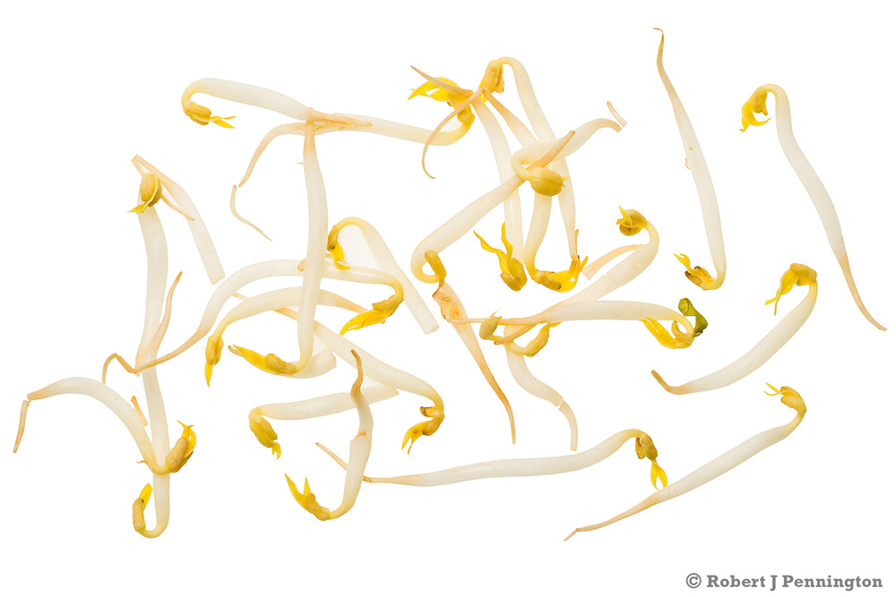 Yellow and white bean sprouts on a white background