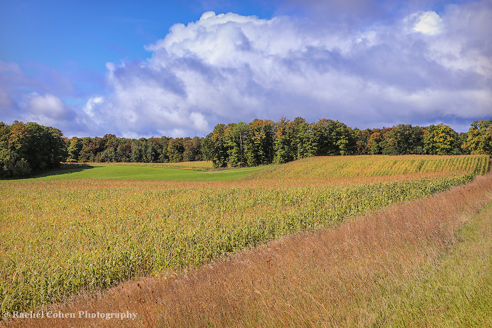 &quot;Heartland Harvest Days&quot;<br /> <br /> Corn fields, grasses, trees with a bit of autumn color, and gorgeous puffy white clouds! What a wonderful harvest time scene in Michigan!