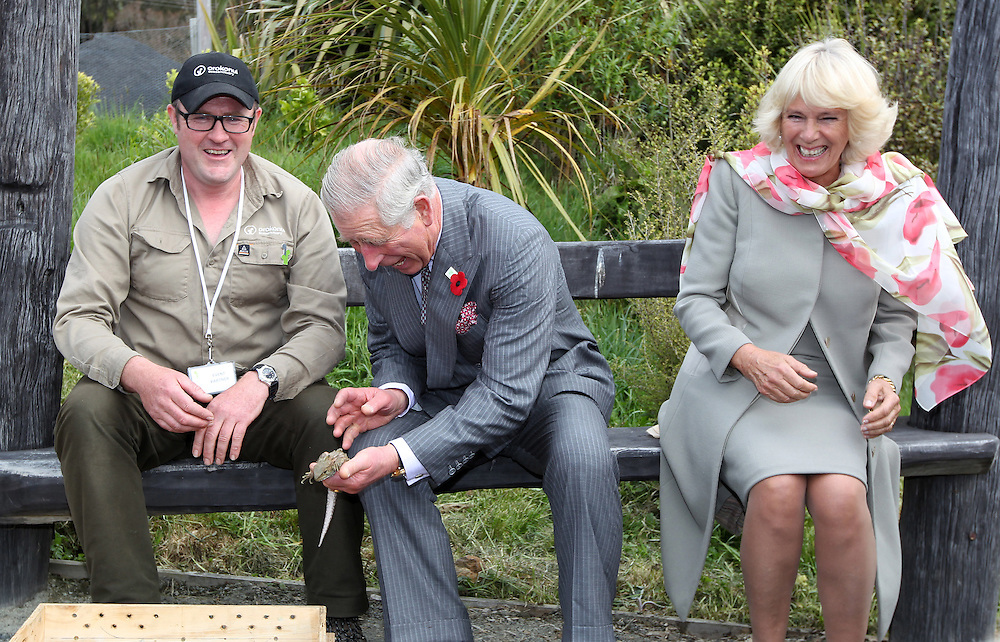 Prince Charles, Prince of Wales laughs while putting the Tuatara back into it's temporary home while Camilla, Duchess of Cornwall continues to laugh after a bumble bee took a liking to Prince Charles on during their visit to the Orokonui Ecosanctuary, Dunedin, New Zealand, Thursday, November 05, 2015. Credit:SNPA / Getty, Rob Jefferies **POOL**
