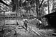 Brazil, Amazonas, Eldorado do Juma.<br /> <br /> Grota rica, curutela (camp de base).<br /> Eldorado do Juma est maintenant un bidonville de plastique noir et de misere croissante sur la rive du fleuve, qui attire les prospecteurs. Des centaines d'hommes y creusent la boue sur leurs petites parcelles delimitees par des branchages et des ficelles. A la fin du jour, les plus chanceux auront trouve quelques poussieres d'or, vendues ensuite 40 reals le gramme (14,5 euros) a Apui, 65km au nord. Les plus riches du coin sont ceux et celles qui cuisinent, nettoient ou divertissent les mineurs.<br /> Il y a trop de prospecteurs pour la teneur du filon, du coup les garimpeiros s&rsquo;eparpillent sur une surface qui couvre plus de 40 hectares. Tous les mineurs dependent de l'autorisation d'une cooperative de proprietaires pour travailler. Ces proprietaires ne possedent pourtant pas de titre foncier pour justifier leur etat, ils sont simplement arriver les premiers sur les parcelles : c'est la loi de l'or.<br /> Quatre mois apres le debut de cette ruee, la plupart du minerai qui peut etre extrait manuellement a ete trouve, les mineurs qui restent sont les survivants de la rumeur. Ils n'ont souvent plus rien et esperent seulement trouver de quoi payer le voyage pour aller tenter leur chance vers d'autres terres promises.