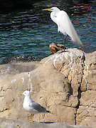 Seagull,Seal and Crane