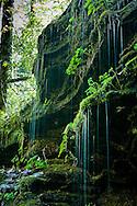 Pearsons Falls - North Carolina