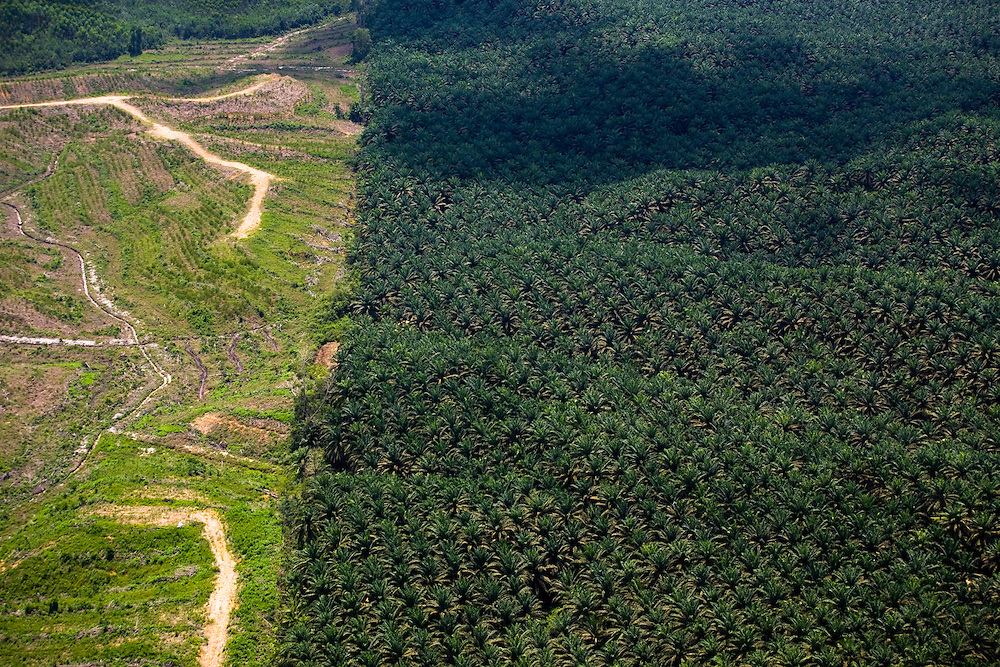 Vast expanses of palm oil plantations have replaced the rainforest around Pekanbaru capital of Riau province, Sumatra, Indonesia, Aug. 30, 2008..Daniel Beltra/Greenpeace