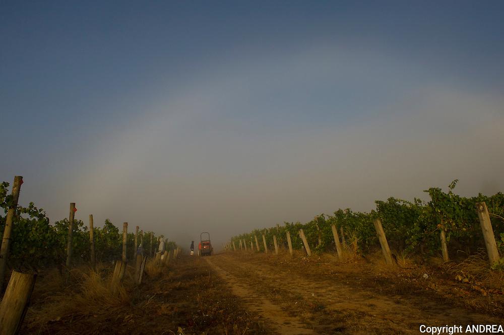 Chehalem's Ridgecrest vineyard, Ribbon Ridge AVA, Willamette Valley, Oregon