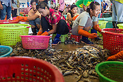 30 APRIL 2013 - MAHACHAI, SAMUT SAKHON, THAILAND:   Burmese women work in a shrimp processing plant in the Thai fishing port of Mahachai. The Thai fishing industry is heavily reliant on Burmese and Cambodian migrants. Burmese migrants crew many of the fishing boats that sail out of Samut Sakhon and staff many of the fish processing plants in Samut Sakhon, about 45 miles south of Bangkok. Migrants pay as much $700 (US) each to be smuggled from the Burmese border to Samut Sakhon for jobs that pay less than $5.00 (US) per day. There have also been reports that some Burmese workers are abused and held in slavery like conditions in the Thai fishing industry.         PHOTO BY JACK KURTZ