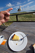Sylt, Germany. Samoa Seepferdchen. A seagull trying to steal food from visitors' tables.
