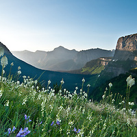 glacier national park bear grass, montana travel and tourims photograph