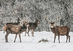 © Licensed to London News Pictures.<br />