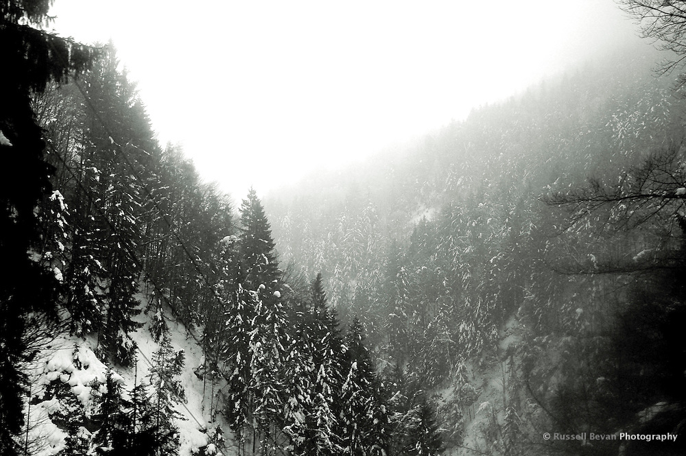 Snowy Trees in valley
