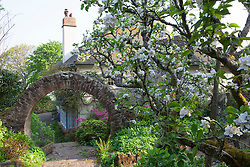 View from vegetable garden towards the circular stone arch and house with azaleas and wisteria. Greencombe Gardens, Porlock, Somerset