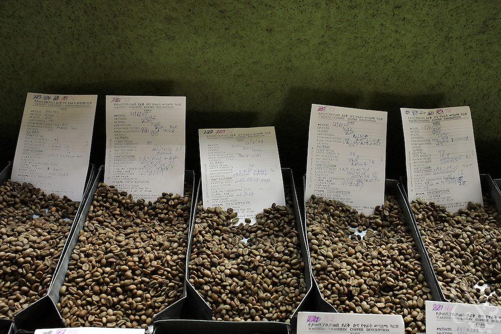 Local samples of various Ethiopian coffees are labeled, rated and put on display at the local coffee auction house February 21, 2007 in Addis Ababa, Ethiopia.  A portion of Ethiopia's export quality coffee, and all of it's domestic quality coffee is sold at local auction to traders and distributors.