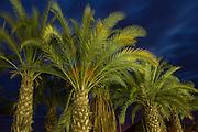 Palm tree and artificial lighting at sunset, Cartagena, Murcia, Spain, Europe