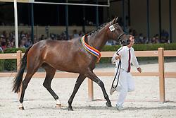 108, Hilexta II<br /> Nationale Merriekeuring, 3 jarige Halfbloedmerrie<br /> KWPN Paardendagen Ermelo 2015<br /> © Hippo Foto - Leanjo de Koster