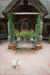 Display of Pelargonium 'Scarlet Unique' in terracotta pots in The Italian Garden at Hidcote Manor Garden