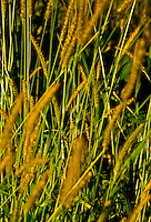 Beautiful aspect of grass photographed at night.
