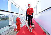 Kennel master Oliver Cruz walks Chloe, Ella Bean and Wally in the remastered kennels on the Queen Mary 2, the only passenger liner to carry pets, Wednesday, July 6, 2016, at Brooklyn Cruise Terminal in New York, its U.S. homeport.  The Queen Mary 2 spent 25 days in dry dock and a refit that cost in the region of $132 million, renovating its staterooms, restaurants and public areas.  (Diane Bondareff/AP Images for Cunard)