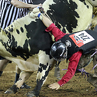 Kailer McCoy gets hung up on a bull during the 129th performance of the PRCA Silver Spurs Rodeo at the Silver Spurs Arena   on Friday, June 1, 2012 in Kissimmee, Florida. (AP Photo/Alex Menendez) Silver Spurs rodeo action in Kissimee, Florida. PRCA rodeo event in Florida. The 129th annual running of the cowboy event.