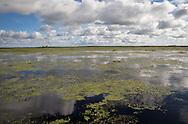 Duckweed along the shore of Lake Boeuff, part of Louisiana's wetlands.