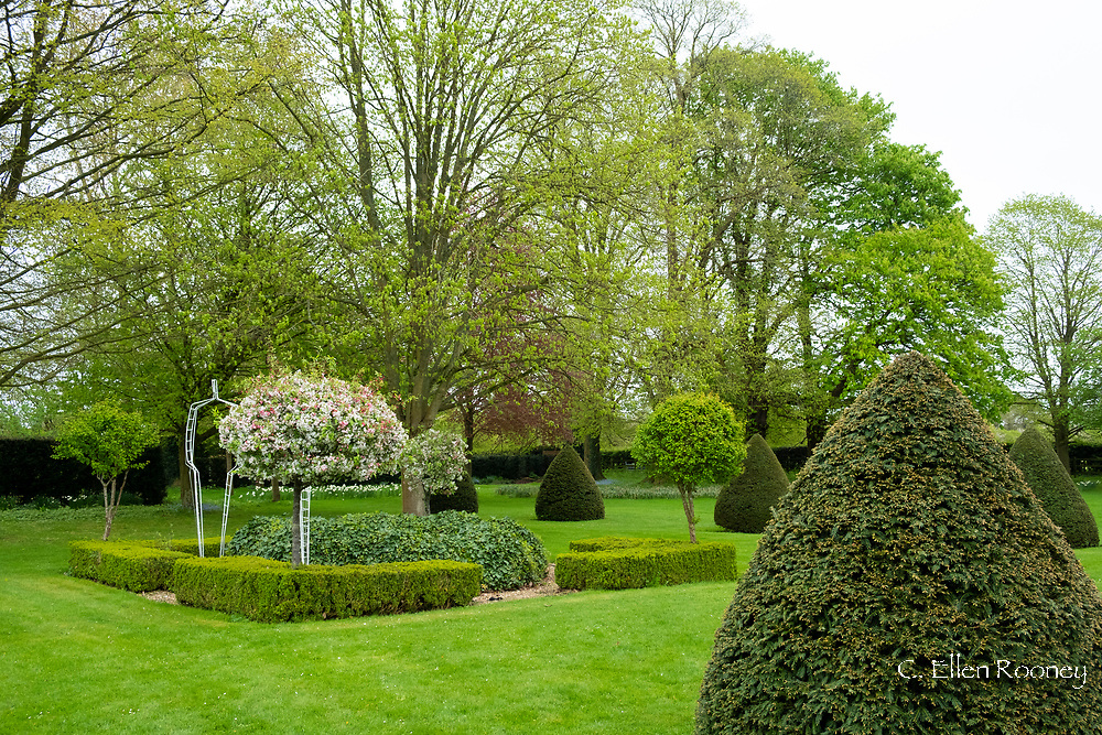 A spherical shaped apple tree with blossom surrounded by Yew and Box topiary at Chenies Manor Gardens, Rickmansworth, Buckinghamshire, UK, April