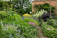 Densely packed borders of Geranium, Bapstisia australis, and Astrantia 'Roma' along a stone path leading to the Malt House in the Terrace Garden in East Lambrook Manor Gardens, South Petherton, Ilminster, Somerset, UK