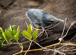 Galapagos Islands expedtion