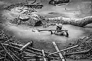 Brazil, Amazonas, Eldorado do Juma.<br /> <br /> Grota rica, garimpeiro.<br /> Eldorado do Juma est maintenant un bidonville de plastique noir et de misere croissante sur la rive du fleuve, qui attire les prospecteurs. Des centaines d'hommes y creusent la boue sur leurs petites parcelles delimitees par des branchages et des ficelles. A la fin du jour, les plus chanceux auront trouve quelques poussieres d'or, vendues ensuite 40 reals le gramme (14,5 euros) a Apui, 65km au nord. Les plus riches du coin sont ceux et celles qui cuisinent, nettoient ou divertissent les mineurs.<br /> Il y a trop de prospecteurs pour la teneur du filon, du coup les garimpeiros s&rsquo;eparpillent sur une surface qui couvre plus de 40 hectares. Tous les mineurs dependent de l'autorisation d'une cooperative de proprietaires pour travailler. Ces proprietaires ne possedent pourtant pas de titre foncier pour justifier leur etat, ils sont simplement arriver les premiers sur les parcelles : c'est la loi de l'or.<br /> Quatre mois apres le debut de cette ruee, la plupart du minerai qui peut etre extrait manuellement a ete trouve, les mineurs qui restent sont les survivants de la rumeur. Ils n'ont souvent plus rien et esperent seulement trouver de quoi payer le voyage pour aller tenter leur chance vers d'autres terres promises.