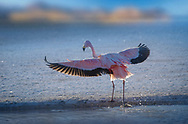 South America, Andes, Altiplano, Bolivia,Laguna Hedionda, Stinky Lagoon,