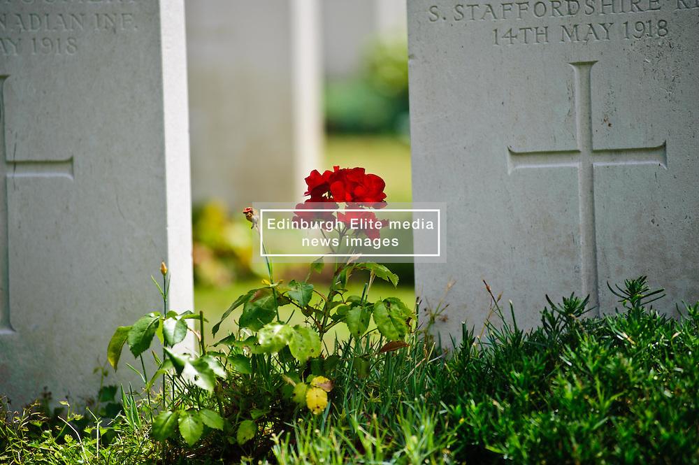 War Graves in Military Cemetary, Tourgeville, Normandy, France<br /> <br /> (c) Andrew Wilson | Edinburgh Elite media
