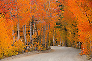 Dirt Road Through The Fall Trees