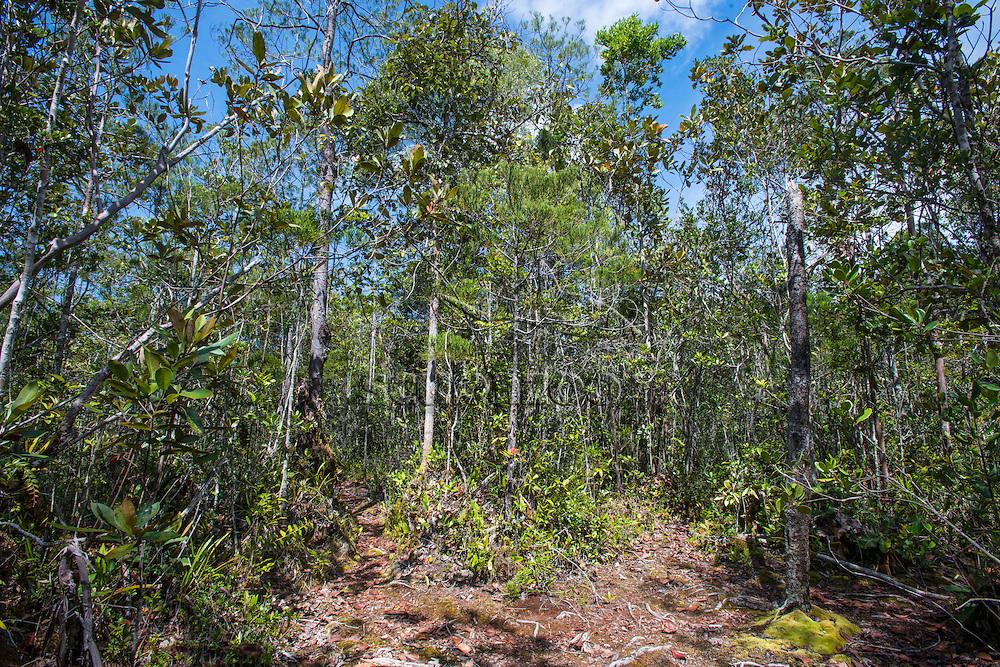A clearing in the jungle, Maliau Basin, Sabah, Malaysia, Borneo,