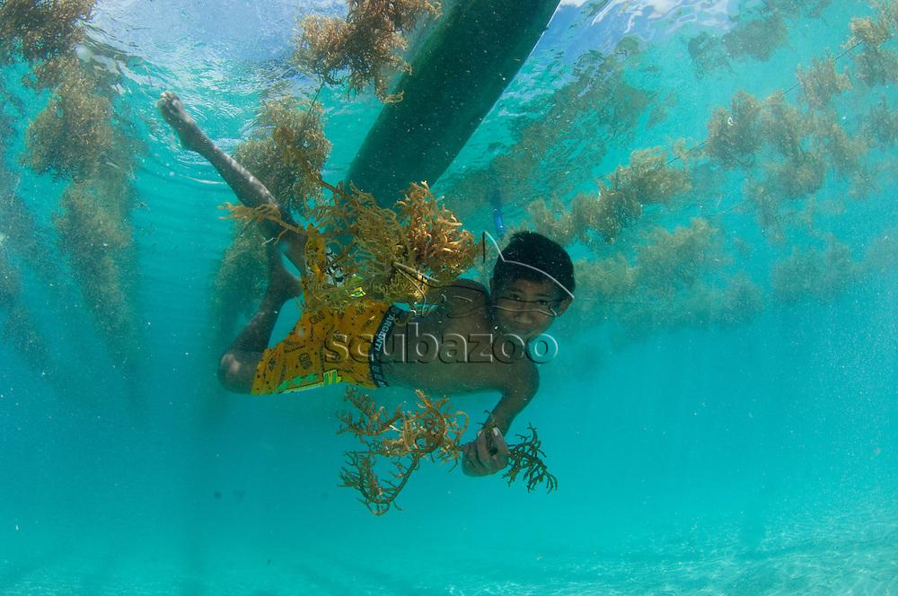 Boy collecting seaweed and posing for camera underwater, Halmahera, Maluku Islands, Indonesia