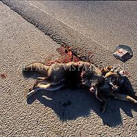 Cachorro apropelado. foto de Ze Paiva/Vista Imagens