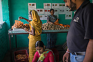 Technoserve Market Linkage Manager Rajiv Shinde (in dark blue t-shirt) supervises and ensures grading quality controls as collection centre workers go about their daily work in the collection centre in Machahi village, Muzaffarpur, Bihar, India on October 27th, 2016. Non-profit organisation Technoserve works with women vegetable farmers in Muzaffarpur, providing technical support in forward linkage, streamlining their business models and linking them directly to an international market through Electronic Trading Platforms. Photograph by Suzanne Lee for Technoserve