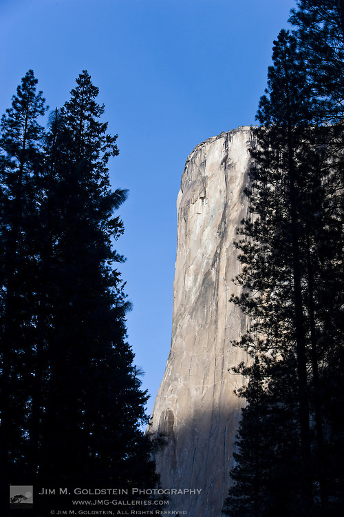 El Capitan as seen through pine trees in Yosemite valley - Yosemite National Park, California