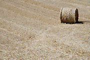 field with a straw bale