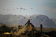 Workers collect bird dung on the Ballestas island, south of Lima, October 8, 2011. Ballestas, as other 21 islands along the Peruvian coast, are home of nearly 4 million migratory birds as guanays, boobies and pelicans which excrement make up the world's finest natural fertilizer. The bird dung, also known as guano, reached its greatest economic importance in the 19th century as a coveted resource, being exported to United States, England and France. Nowadays Peru hopes to benefit mostly small farmers with an annual production of 20 thousand tons, destined to boost organic agriculture, according to Agrorural, the Rural Agrarian Productive Development Program.