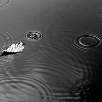 The photograph of a water surface in the fall with a single withered leaf in the rain.