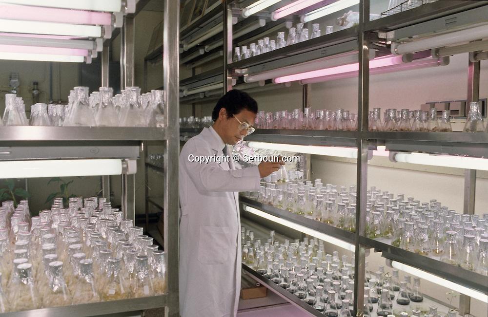 research center about ginseng    Korea   centre de recherche sur le ginseng  Seoul  Corée  ///    L0055109  /  R00013  /  P123005