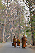 Monks after collecting alms returning to Wat Dara Pirom, Chiang Mai, Thailand