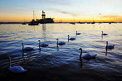 &copy; Licensed to London News Pictures. 02/08/2018<br /> Gravesend, UK. Swans on the River Thames at sunrise at Gravesend in Kent, as the UK is expected to experience another heatwave. Photo credit: Grant Falvey/LNP