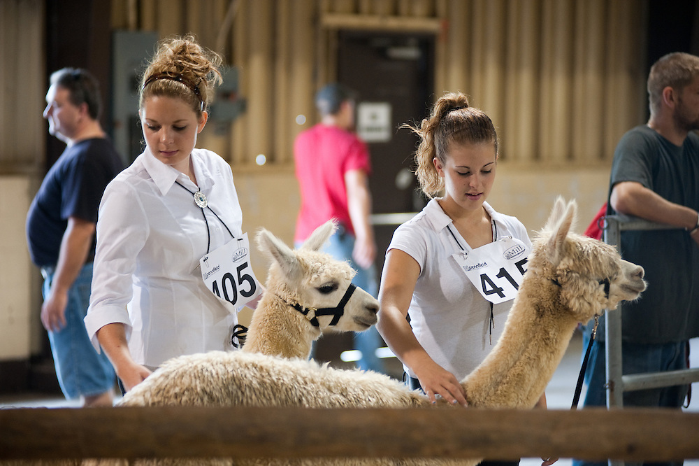 Girls at the  Maryland State Fair with livestock
